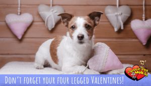 Don't forget your four legged Valentines!